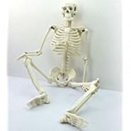 Skeleton - half size
